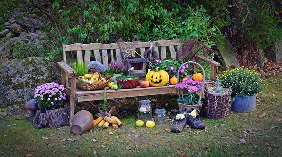 Fall items surrounding bench